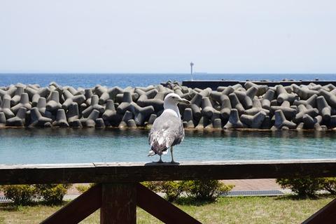 サンライズ城が浜蟹御膳3