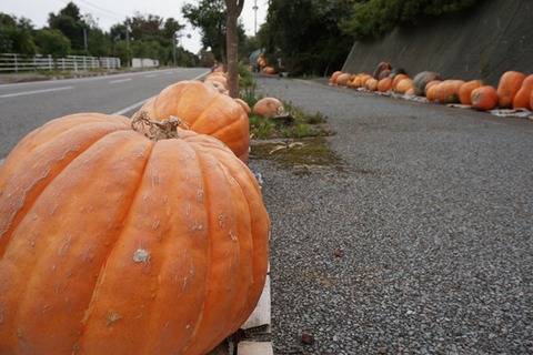 道のかぼちゃ