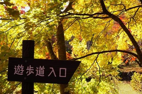 佐渡紅葉山公園11