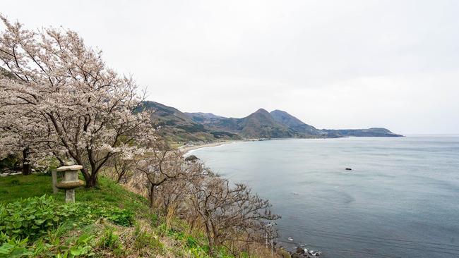 跳坂の桜1-3