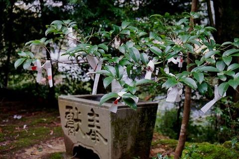 佐渡草苅神社11