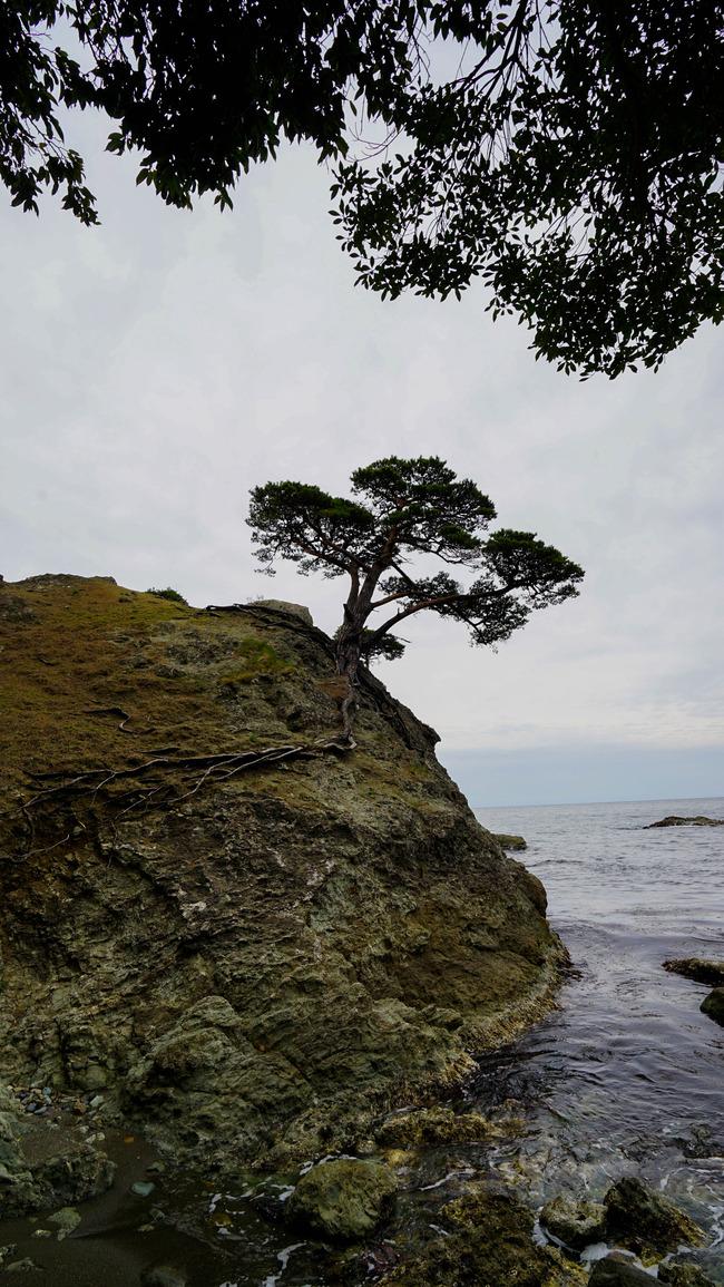 見立ての木々1-2