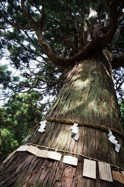 牛尾神社11