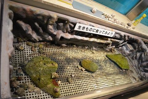 尖閣湾水族館