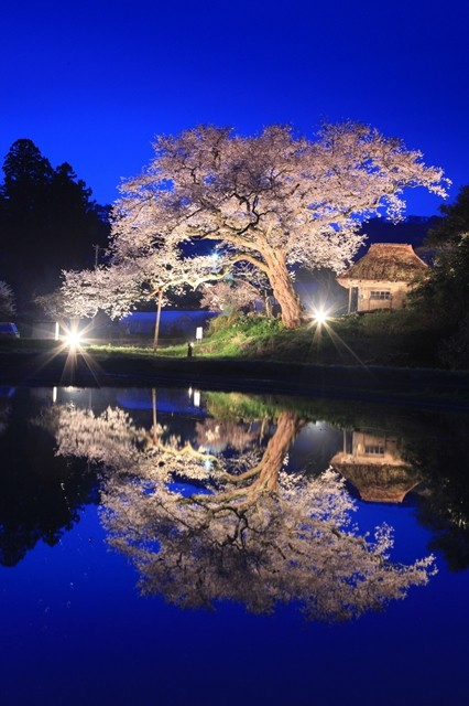 大崎春4月夜桜春の宵(にいがた観光ナビ)