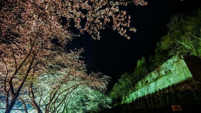 佐渡金山桜ライトアップ2