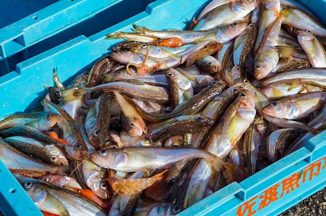 高千漁港5