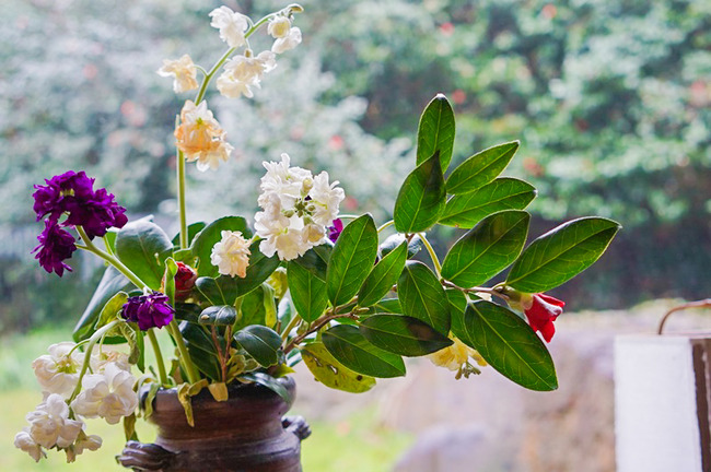 花の木21