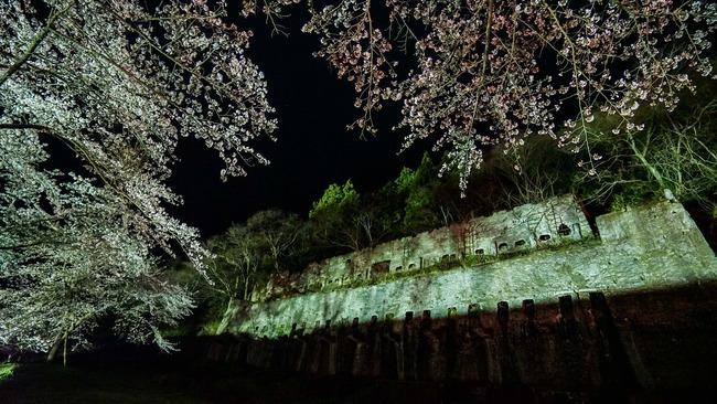 佐渡金山桜ライトアップ3