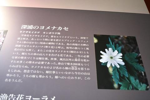 佐渡博物館深浦のヨメナカセ