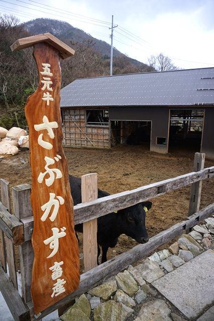 五元牛さぶかず畜産