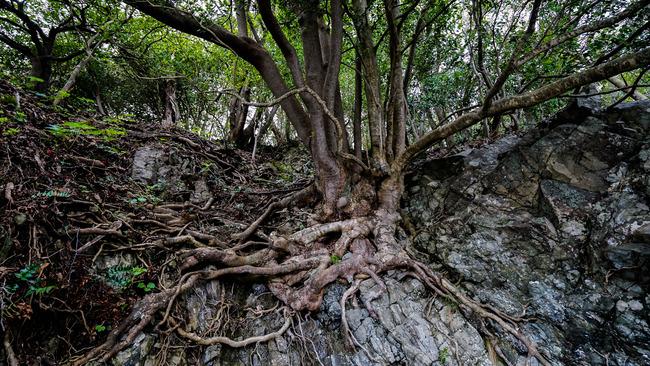 見立ての木々-2