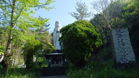 佐渡花の木8