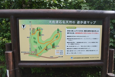 佐渡石名天然杉遊歩道マップ