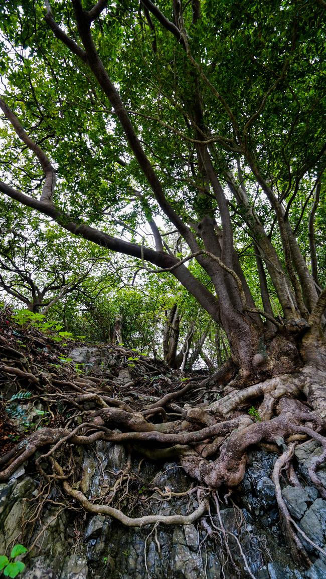 見立ての木々4-2