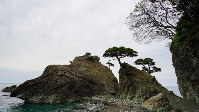 見立ての木々3-2