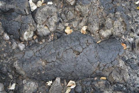 元小木海岸枕状溶岩2