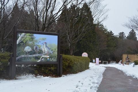 トキの森公園9