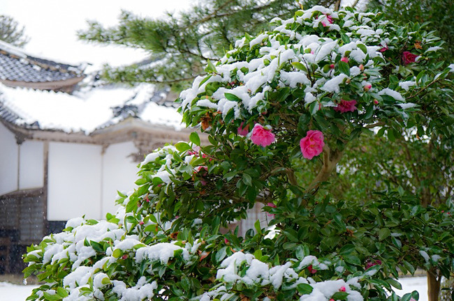 冬の国分寺2