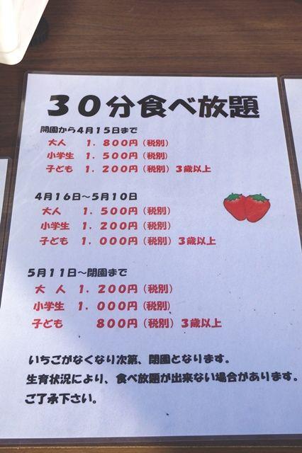 佐渡斉藤農園いちご狩り3