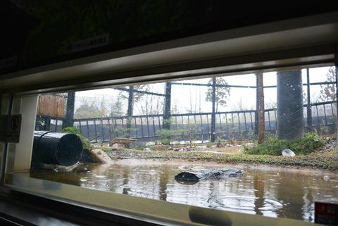 トキの森公園16