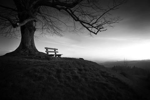 tree-753069_960_720