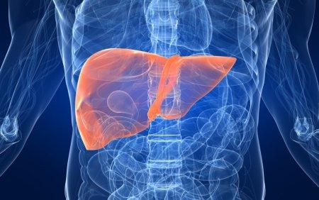 liver_check