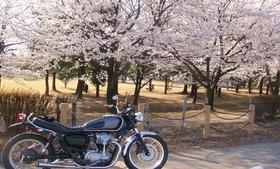 桜 満開!!