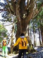 巨木の森トレック!!