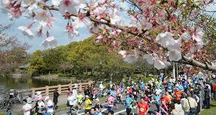 桜マラソン2