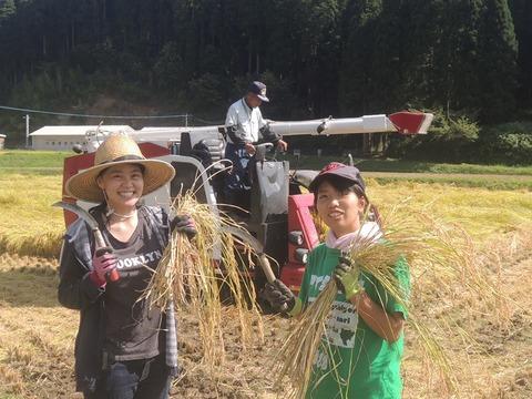 稲刈り体験 ヘルパー松竹と