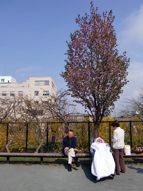 20090505花見2