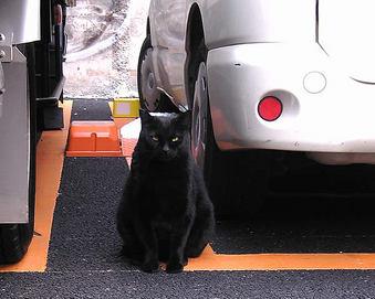 20090410黒猫