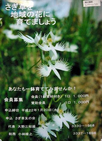 20100110さぎ草