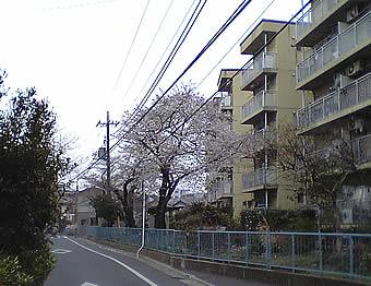 20070324sakura02