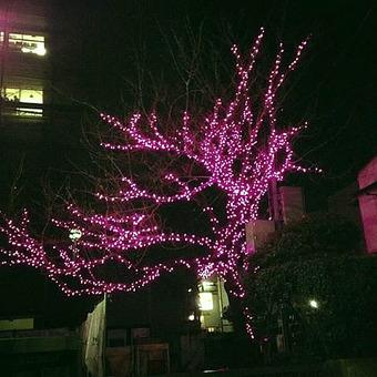 20131214sakura