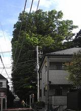20080502sirsagi02