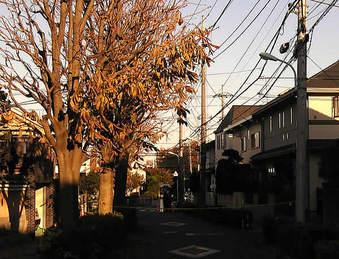20081123kamisagi_genba01