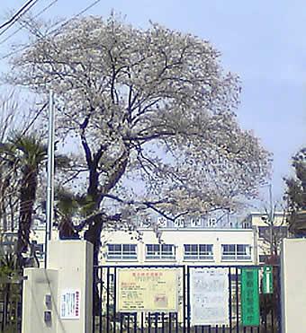 20070401sakura_sagishow
