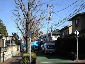 20081122kamisagi_genba03