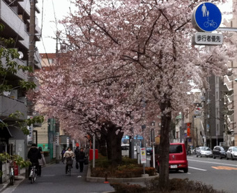 20110403senkawa_st02