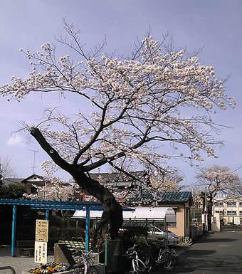 20090405みたけ公園 鷺宮小学校