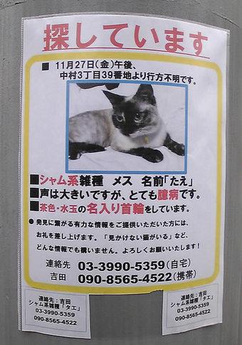 20091226kamisagi_neko