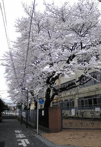 20080330nisinakano