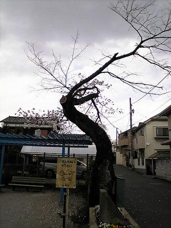 20100403 みたけ公園 鷺宮3丁目 桜 鷺宮小学校