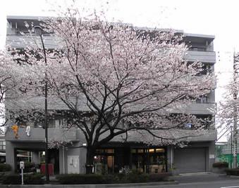 20090404千川通り桜並木
