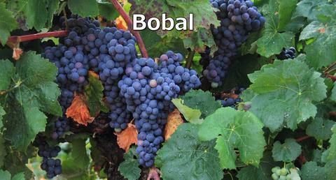 Bobal01