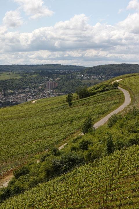 Rheingau02