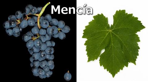 Mencia01
