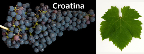 Croatina01